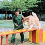Địa chỉ huấn luyện chó cảnh chuyên nghiệp tại Tphcm
